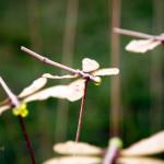 cirkel van libelles: kunstwerk van Margriet Pen